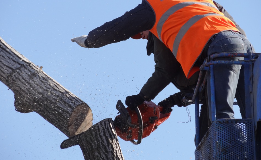 this image shows fullerton pro tree service crew at work