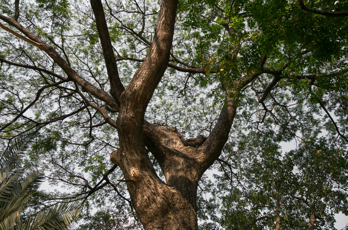 this is an image of fullerton pro tree services