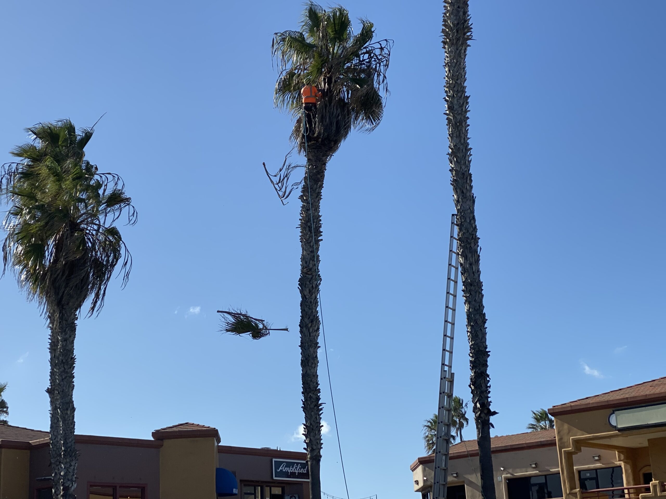 this image shows pest control for trees in fullerton california