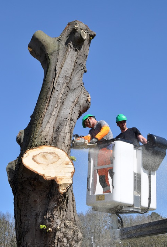 this image shows tree removal in fullerton, california