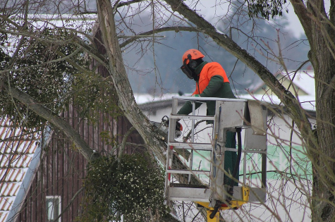 An image of tree pruning in Fullerton, CA.