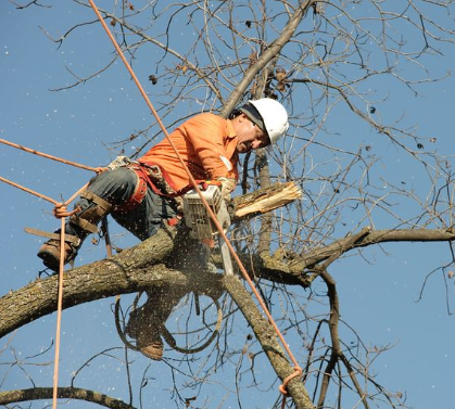 An image of tree removal in Fullerton, CA.