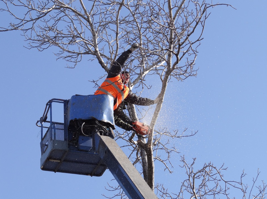 this image shows tree service in fullerton