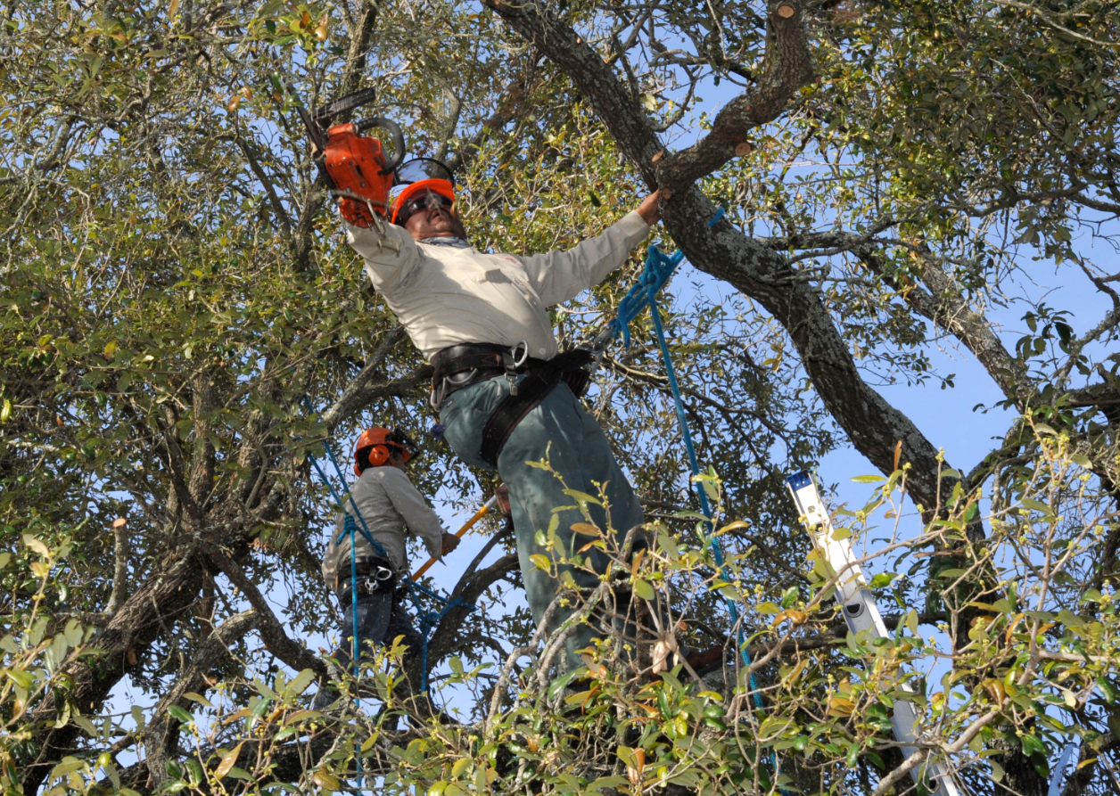 this is an image of tree service in fullerton